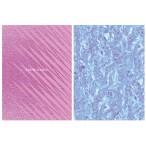Бизнес-блокнот А5 80л. BG тв. обл. Blue and Rose клетка, металлизация, глянцевая ламинация, ассорт